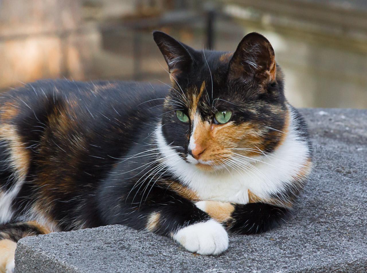 Graveyward kitty